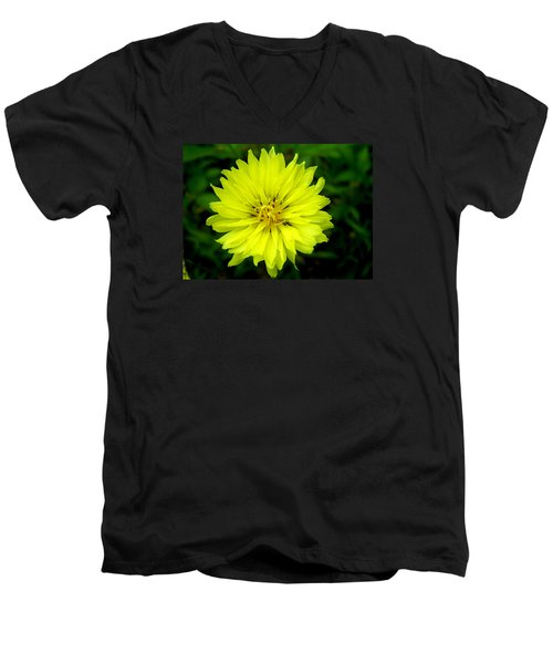 Wild Carolina Desert Chicory Men's V-Neck T-Shirt
