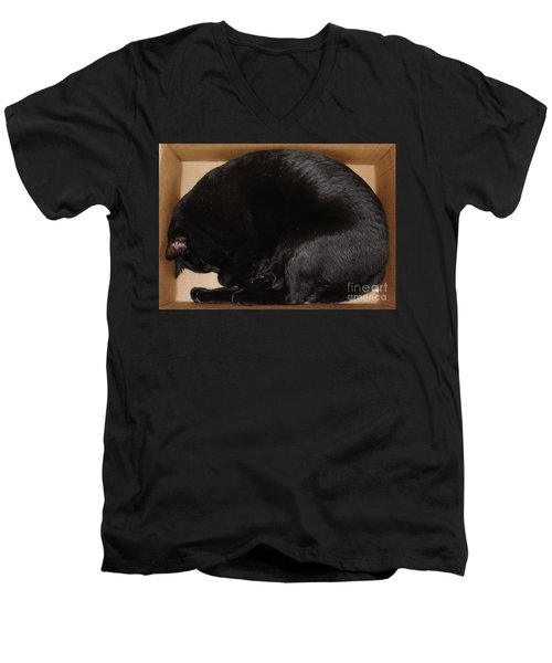 Men's V-Neck T-Shirt featuring the photograph Cat In The Box by Kerri Mortenson