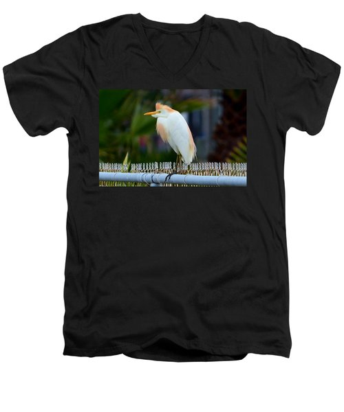 Cattle Egret Breeding Plumage Men's V-Neck T-Shirt by Debra Martz