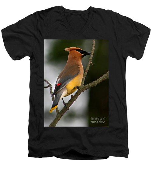 Cedar Wax Wing II Men's V-Neck T-Shirt by Roger Becker