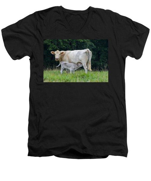 Charolais Cattle Nursing Young Men's V-Neck T-Shirt by Chris Flees