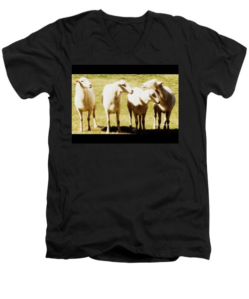 Men's V-Neck T-Shirt featuring the photograph Cheviot Sheep by Kathy Barney