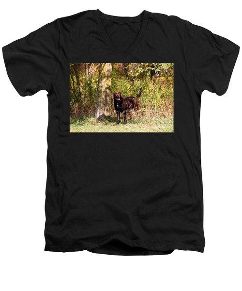 Chocolate Lab Cuteness Men's V-Neck T-Shirt