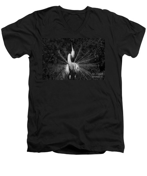 Men's V-Neck T-Shirt featuring the photograph Great Egret Courtship Plumes  by John F Tsumas