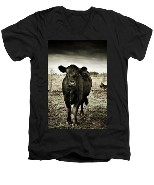 Cow In The Winter Pasture  Men's V-Neck T-Shirt