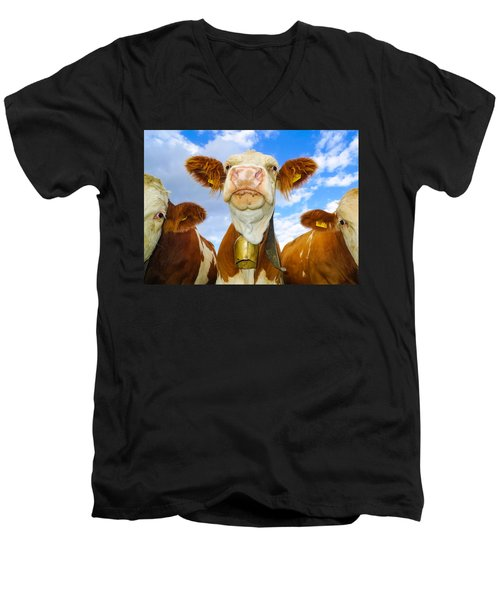 Cow Looking At You - Funny Animal Picture Men's V-Neck T-Shirt