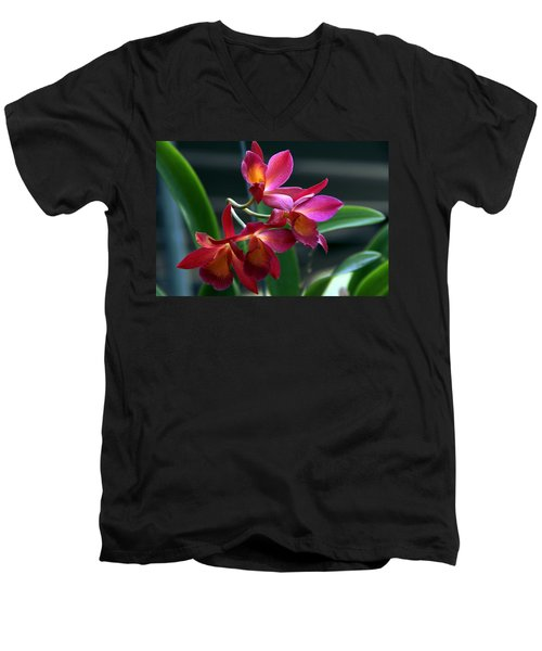 Ctna New River Orchid Men's V-Neck T-Shirt by Greg Allore