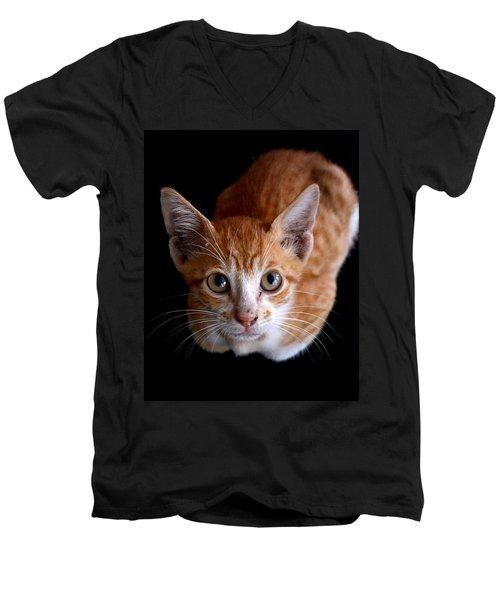 Cute Kitten Men's V-Neck T-Shirt