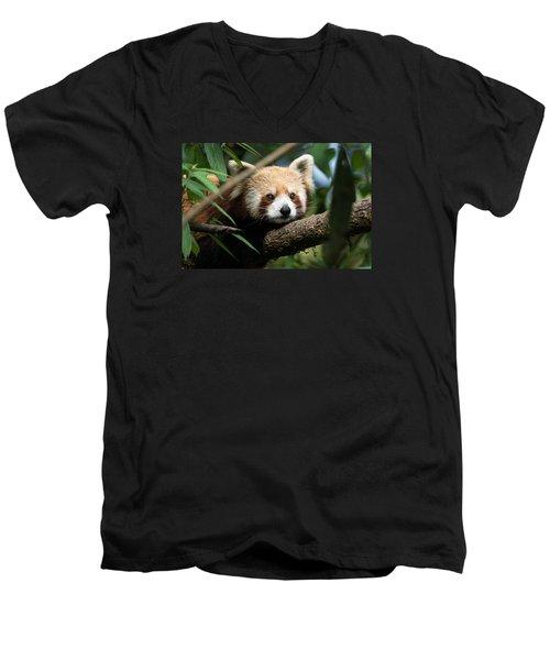 Cute Panda Men's V-Neck T-Shirt by Fotosas Photography