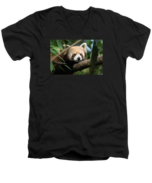 Cute Panda Men's V-Neck T-Shirt
