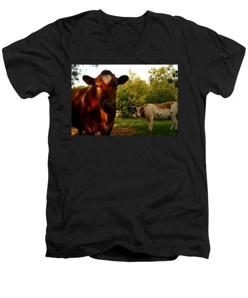 Dads Cows Men's V-Neck T-Shirt by Lon Casler Bixby