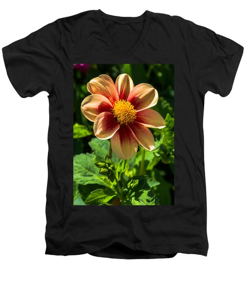 Dahlia 4 Men's V-Neck T-Shirt