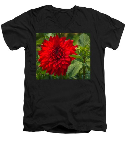 Dahlia Perfection Men's V-Neck T-Shirt