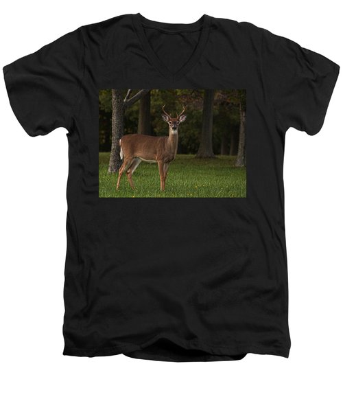 Men's V-Neck T-Shirt featuring the photograph Deer In Headlight Look by Tammy Espino