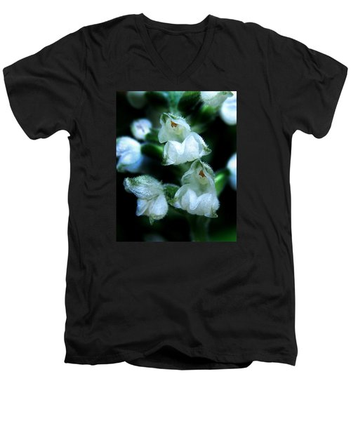 Downy Rattlesnake Plantain Orchid Men's V-Neck T-Shirt by William Tanneberger