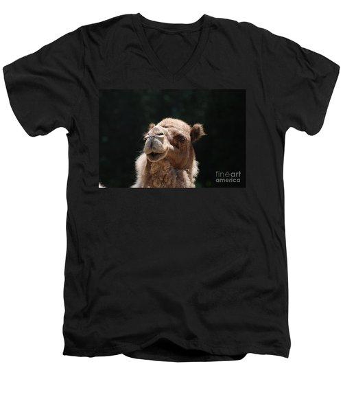 Dromedary Camel Face Men's V-Neck T-Shirt