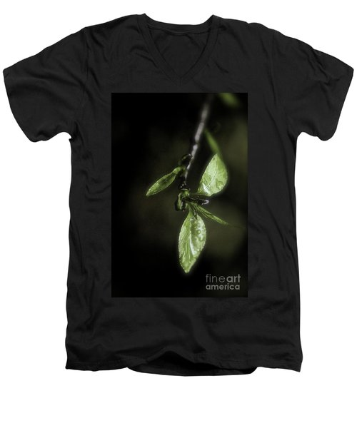 Early Spring Leaves Men's V-Neck T-Shirt