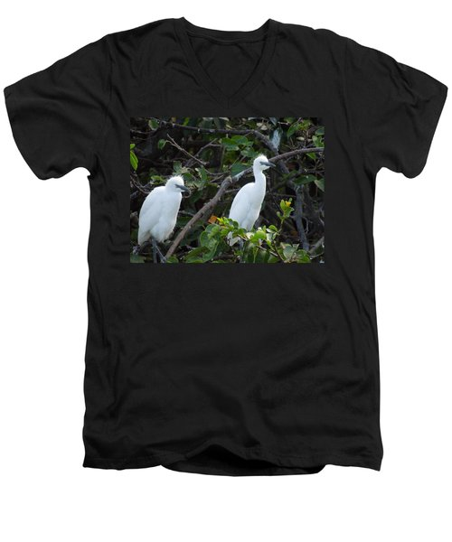 Egret Chicks Waiting To Be Fed Men's V-Neck T-Shirt by Ron Davidson