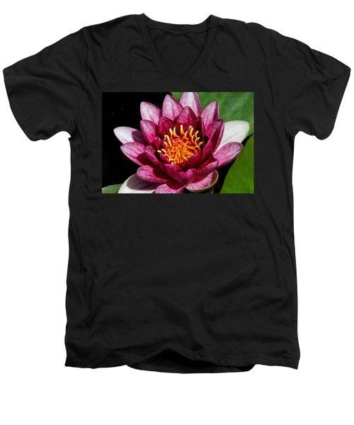 Elegant Lotus Water Lily Men's V-Neck T-Shirt