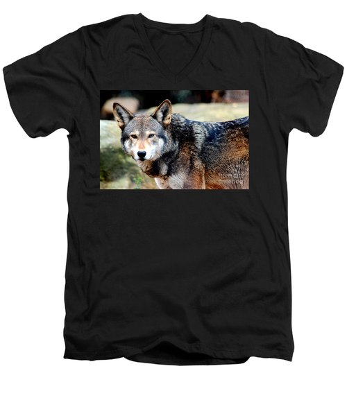 Endangered Red Wolf Men's V-Neck T-Shirt by Kathy  White