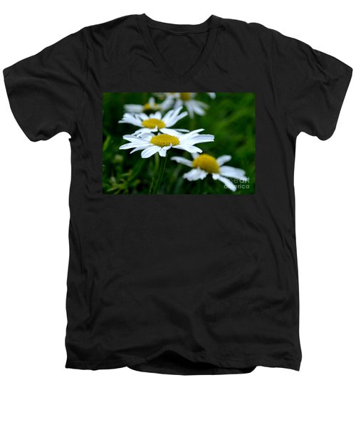 English Daisies Men's V-Neck T-Shirt
