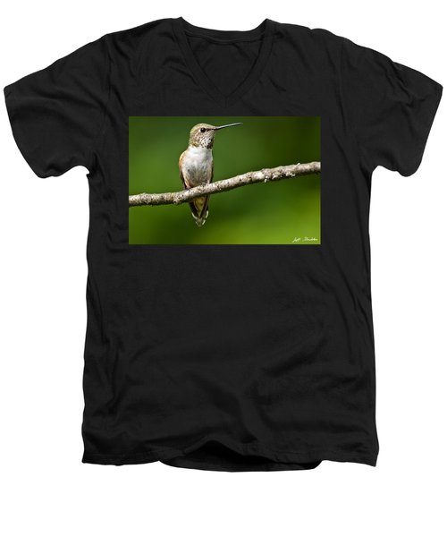 Female Rufous Hummingbird In A Tree Men's V-Neck T-Shirt by Jeff Goulden