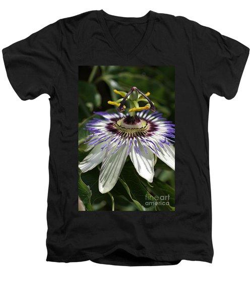 flower-Passionfruit Men's V-Neck T-Shirt