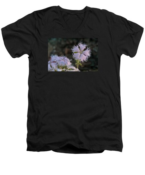 Men's V-Neck T-Shirt featuring the photograph Fringed Catchfly by Paul Rebmann