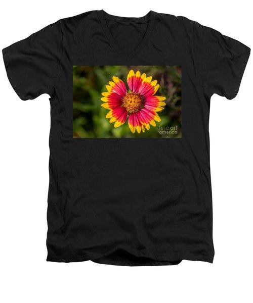 Gaillardia Shows Off Men's V-Neck T-Shirt