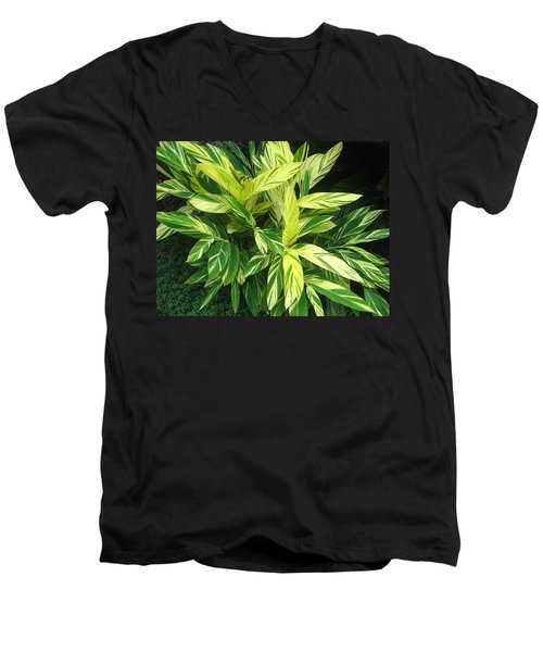 Ginger Lily. Alpinia Zerumbet Men's V-Neck T-Shirt by Connie Fox