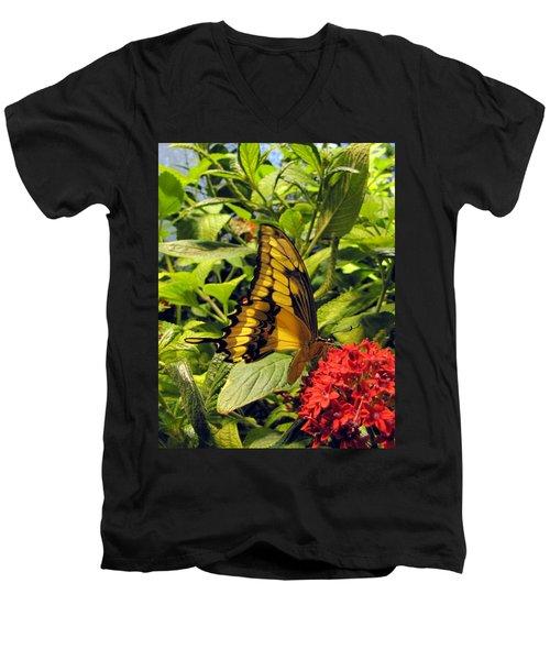 Gold Giant Swallowtail Men's V-Neck T-Shirt