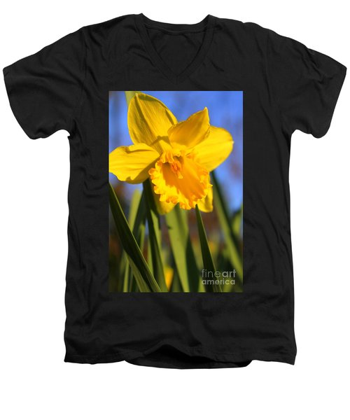 Golden Glory Daffodil Men's V-Neck T-Shirt