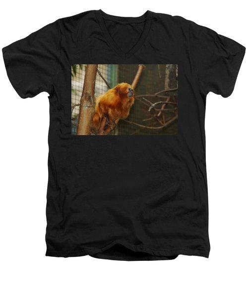 Golden Men's V-Neck T-Shirt by Jean Goodwin Brooks