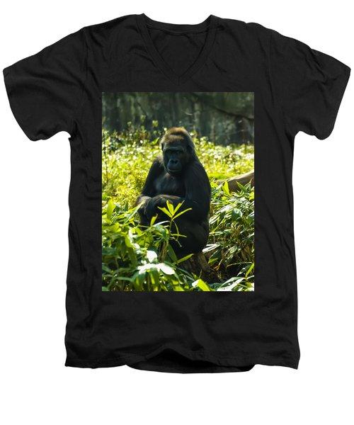 Gorilla Sitting On A Stump Men's V-Neck T-Shirt by Chris Flees