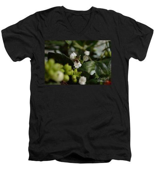 Gypsophilia Hover Fly Men's V-Neck T-Shirt
