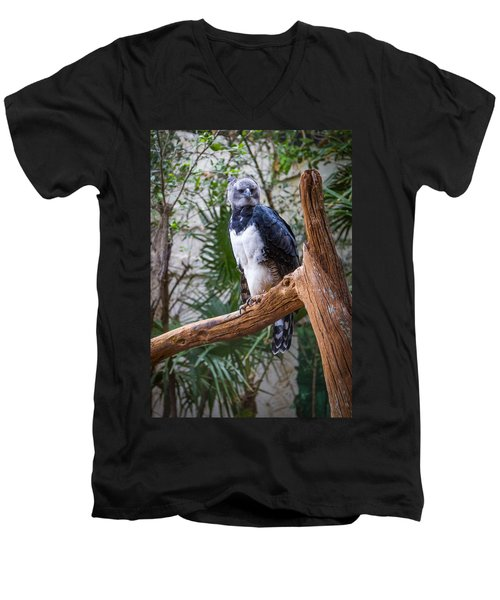 Harpy Eagle Men's V-Neck T-Shirt by Ken Stanback