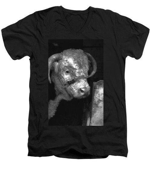 Hereford Bull In Black And White Men's V-Neck T-Shirt