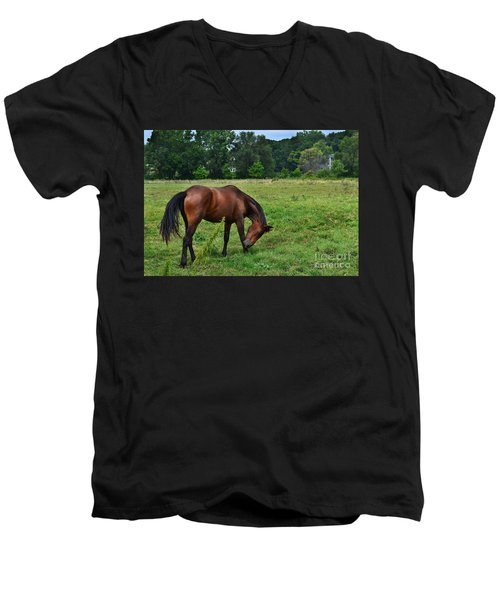 Horse In Holland Michigan Men's V-Neck T-Shirt