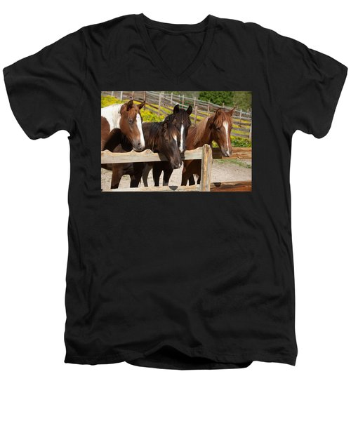 Horses Behind A Fence Men's V-Neck T-Shirt