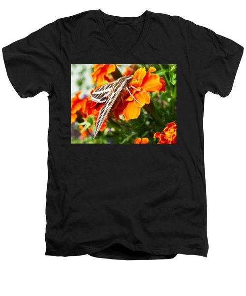 Hummingbird Moth On A Marigold Flower Men's V-Neck T-Shirt
