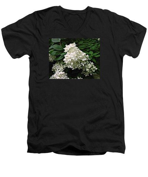 Hydrangea Arborescens ' Annabelle ' Men's V-Neck T-Shirt