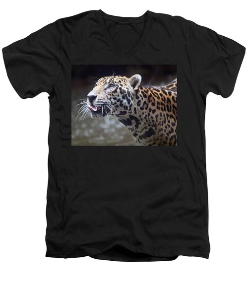 Men's V-Neck T-Shirt featuring the photograph Jaguar Sticking Out Tongue by Shoal Hollingsworth