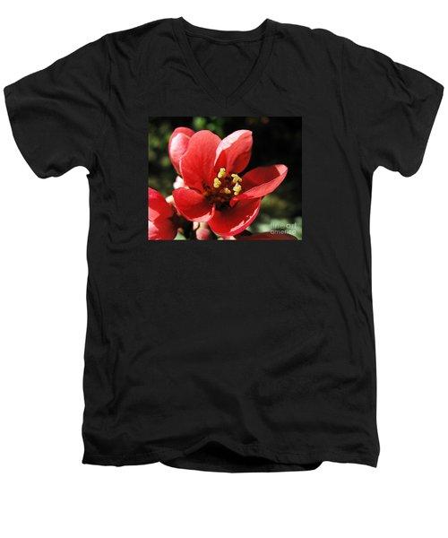 Men's V-Neck T-Shirt featuring the photograph Japanese Apple Flower by Vesna Martinjak