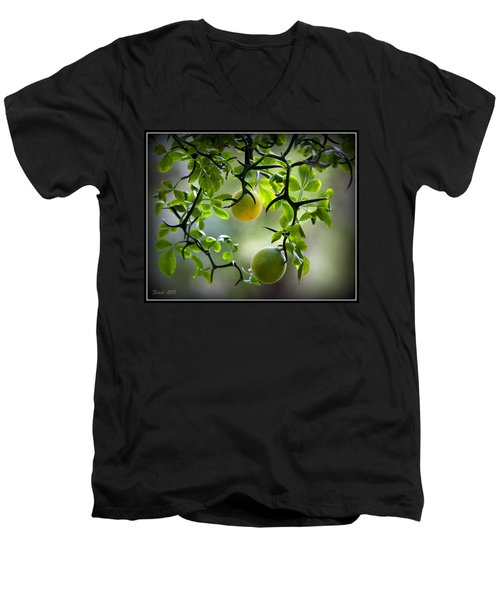 Japanese Orange Tree Men's V-Neck T-Shirt