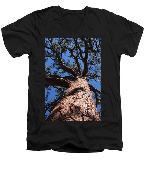 Jeffrey Pine Men's V-Neck T-Shirt