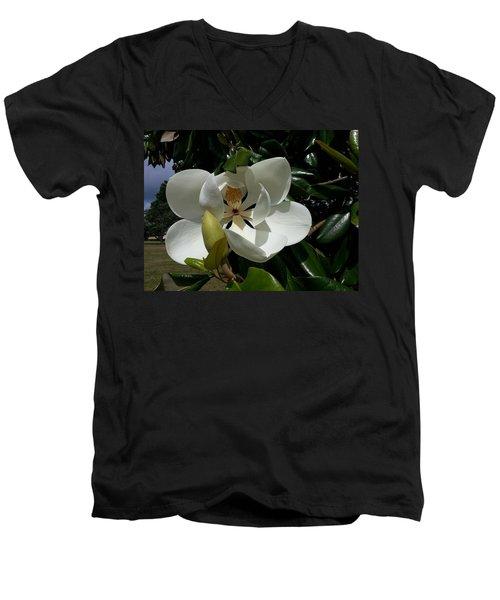 Lemon Magnolia Men's V-Neck T-Shirt