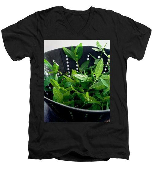 Lemon Verbena Herbs Men's V-Neck T-Shirt