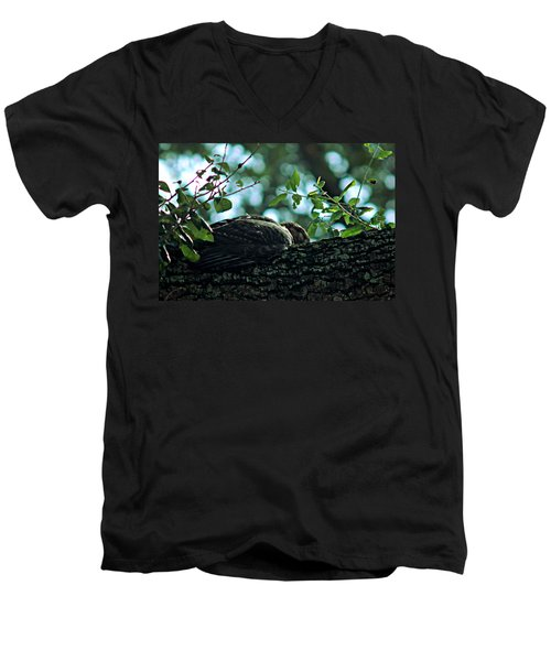 Let Sleeping Hawks Lie Men's V-Neck T-Shirt by Greg Allore