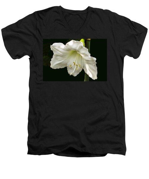 Lily Men's V-Neck T-Shirt