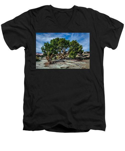 Limber Pine Men's V-Neck T-Shirt